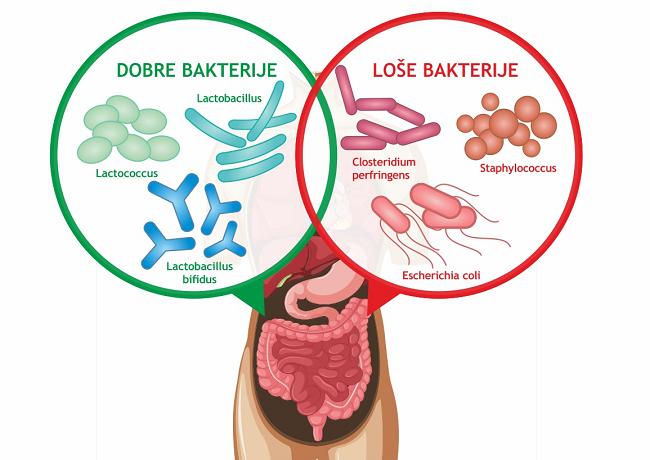 Crijevna flora sastoji se od dobrih i loših bakterija - Kivilaks