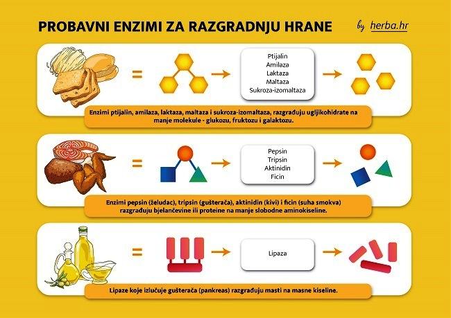 Probavni enzimi za razgradnju hrane - Kivilaks